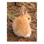 Baby Bunny Postcard