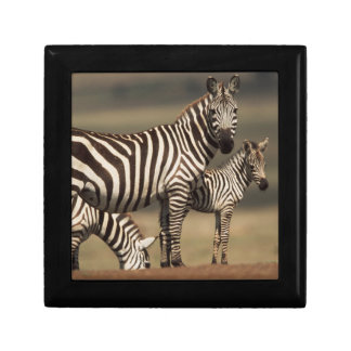 Baby Burchell's Zebra with mother Small Square Gift Box