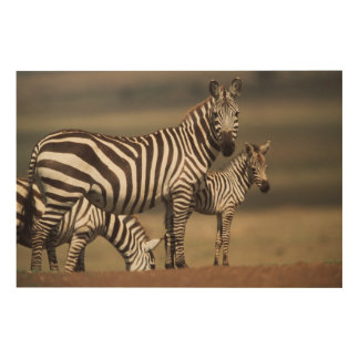Baby Burchell's Zebra with mother Wood Wall Art