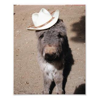 Baby Burro Wearing Hat Photo Print