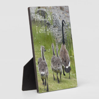 Baby Canada Geese Photo Plaque