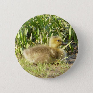 Baby Canada Goose Gosling Button