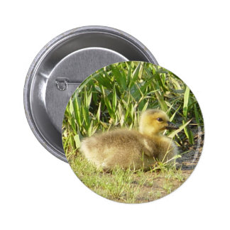 Baby Canada Goose Gosling Button