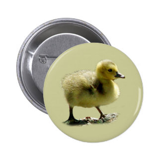 Baby Canadian Goose Button
