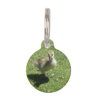 Baby Candian Goose Pet Nametag