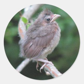 Baby Cardinal Sticker