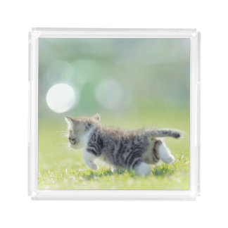 Baby cat running on grass field. acrylic tray