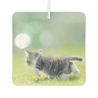 Baby cat running on grass field. car air freshener