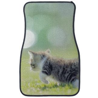 Baby cat running on grass field. car mat