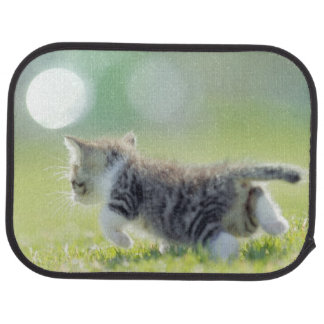 Baby cat running on grass field. car mat