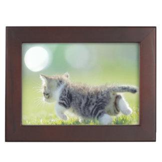 Baby cat running on grass field. keepsake box