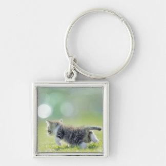 Baby cat running on grass field. key ring