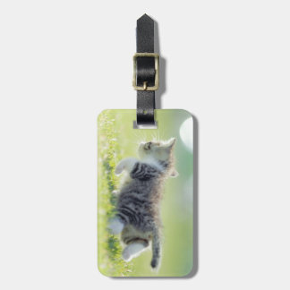 Baby cat running on grass field. luggage tag