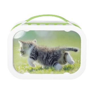 Baby cat running on grass field. lunch box