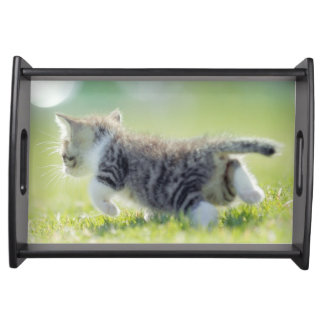 Baby cat running on grass field. serving tray