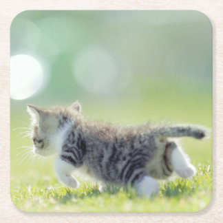 Baby cat running on grass field. square paper coaster