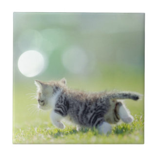 Baby cat running on grass field. tile