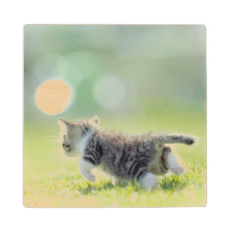 Baby cat running on grass field. wood coaster