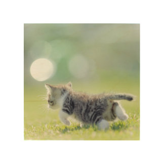 Baby cat running on grass field. wood wall decor