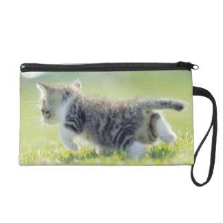 Baby cat running on grass field. wristlet