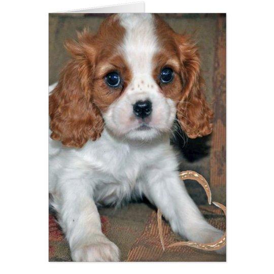 Baby Cavalier King Charles Card