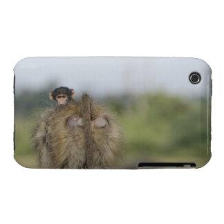 Baby Chacma Baboon (Papio ursinus) riding iPhone 3 Case