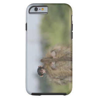 Baby Chacma Baboon (Papio ursinus) riding Tough iPhone 6 Case
