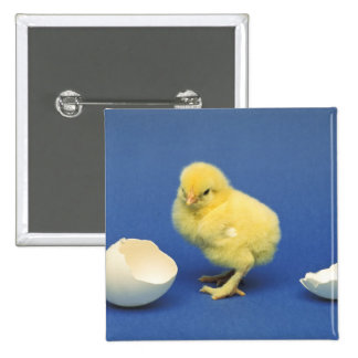 Baby chick 15 cm square badge
