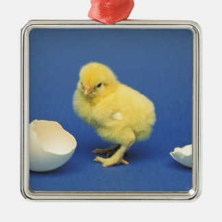 Baby chick christmas ornament