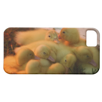 Baby Chick Pile iPhone 5 Cover
