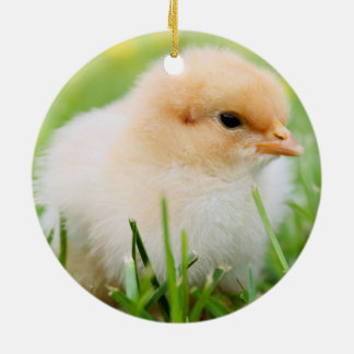 Baby chick sitting in grass christmas tree ornaments