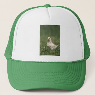 Baby Chick Trucker Hat
