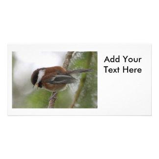 Baby Chickadee Photo Customised Photo Card