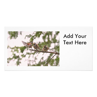 Baby Chickadees and Mother Bird Personalized Photo Card