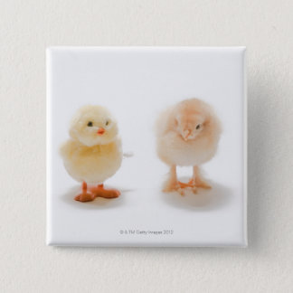 Baby chicken and fake mechanical chicken 15 cm square badge