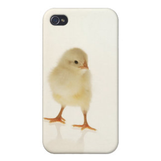 Baby chicken iPhone 4/4S cover