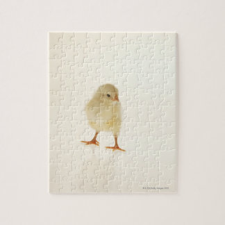 Baby chicken jigsaw puzzle