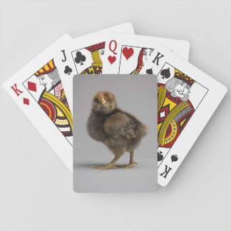 Baby Chicken Playing Cards
