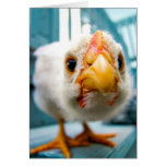 Baby Chicken, Rooster, Farm Animal, Greeting Card