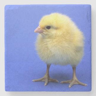 Baby chicken. stone coaster