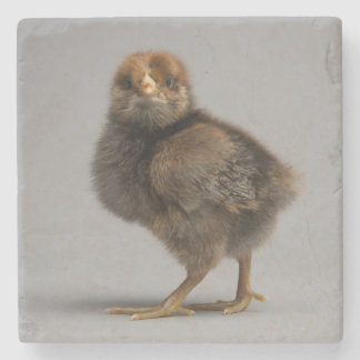 Baby Chicken Stone Coaster