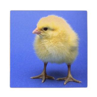Baby chicken. wood coaster