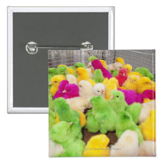 Baby Chicks In A Pen At A Market Colored By Dye 15 Cm Square Badge