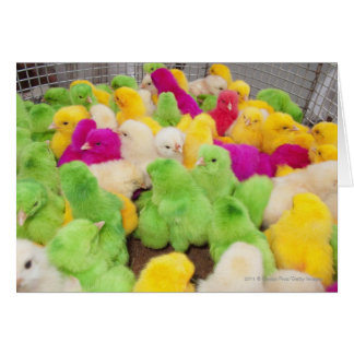 Baby Chicks In A Pen At A Market Colored By Dye Card