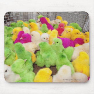 Baby Chicks In A Pen At A Market Colored By Dye Mouse Mat