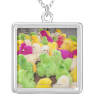 Baby Chicks In A Pen At A Market Colored By Dye Necklaces
