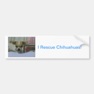 Baby Chihuahua Puppy Bumper Sticker