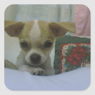 Baby Chihuahua Puppy Square Sticker