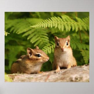 baby chipmunk siblings poster