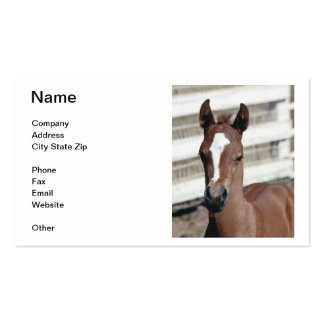 Baby Colt Horse Business Card